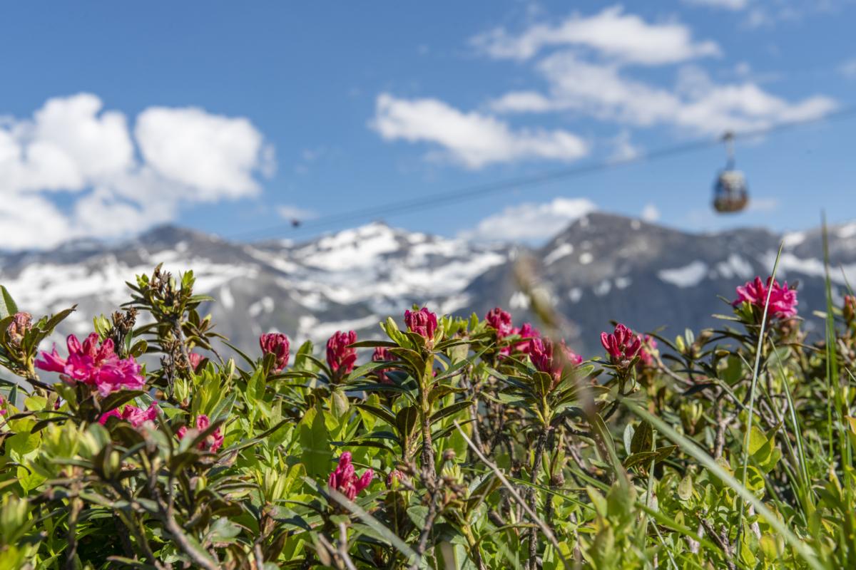 Alpine flower trail