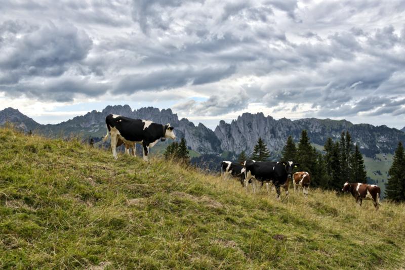 An der Grenze zur Westschweiz