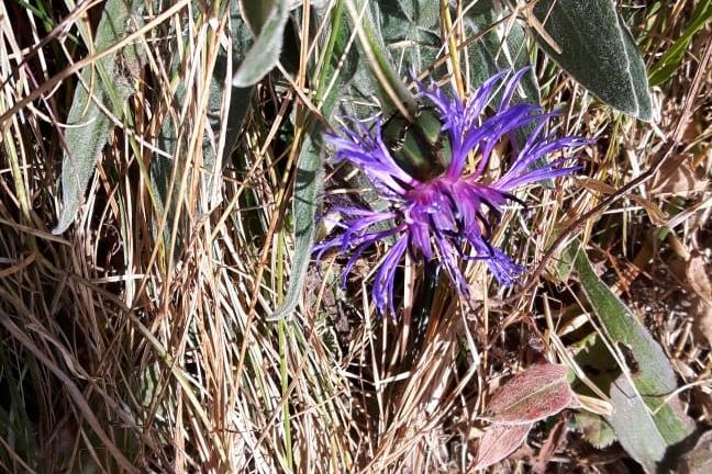 Erlebnis Iris: Blume am Wegrand