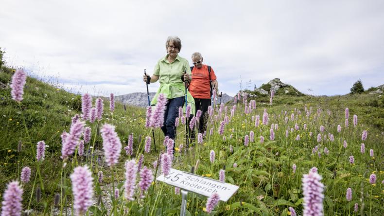 Lenk-Simmental Alpenblumenweg Betelberg