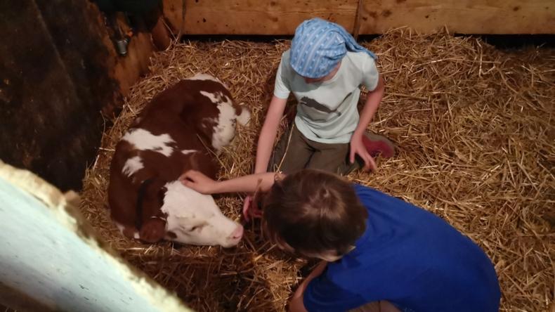 Besuch auf der Alp Kinderprogramm